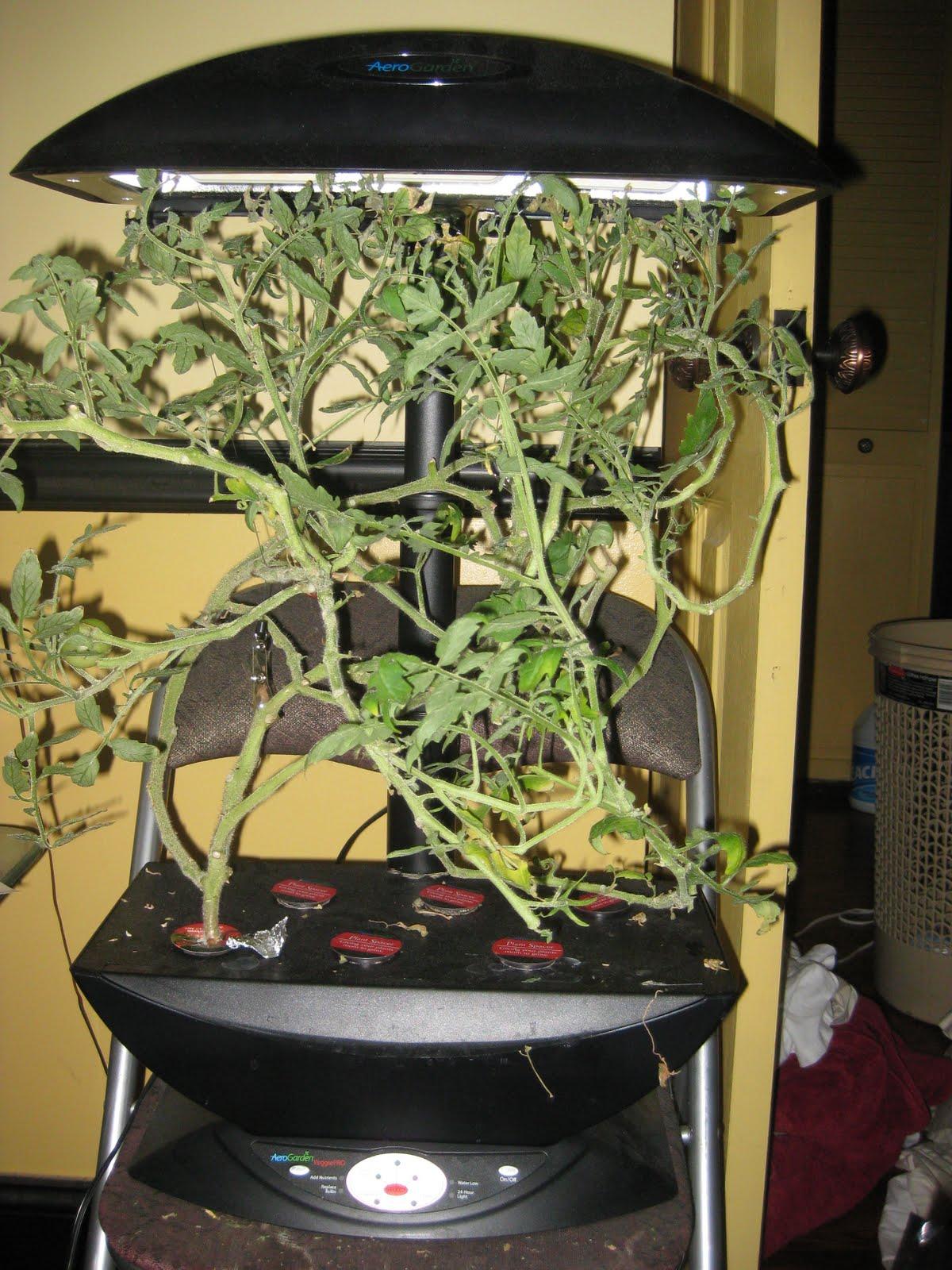 Indoor gardener the 2010 reboot part 1 indoor gardening my indoor gardening my aerogarden and houseplant blog workwithnaturefo