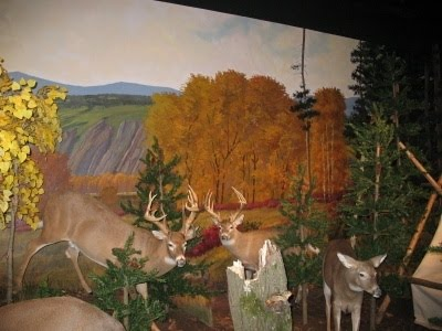 Cabela's Big Game White Tail Section
