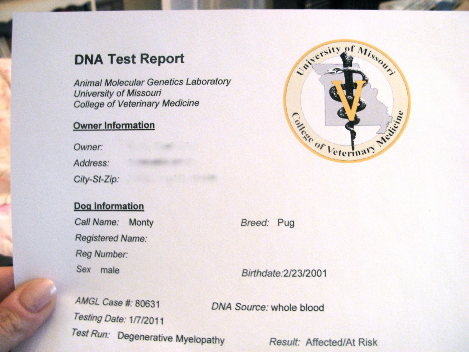 Monty The Handicapped Dog Test Results