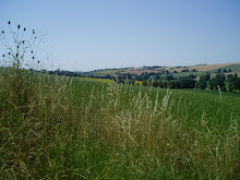 "Les collines ""molles"" lauragaises"