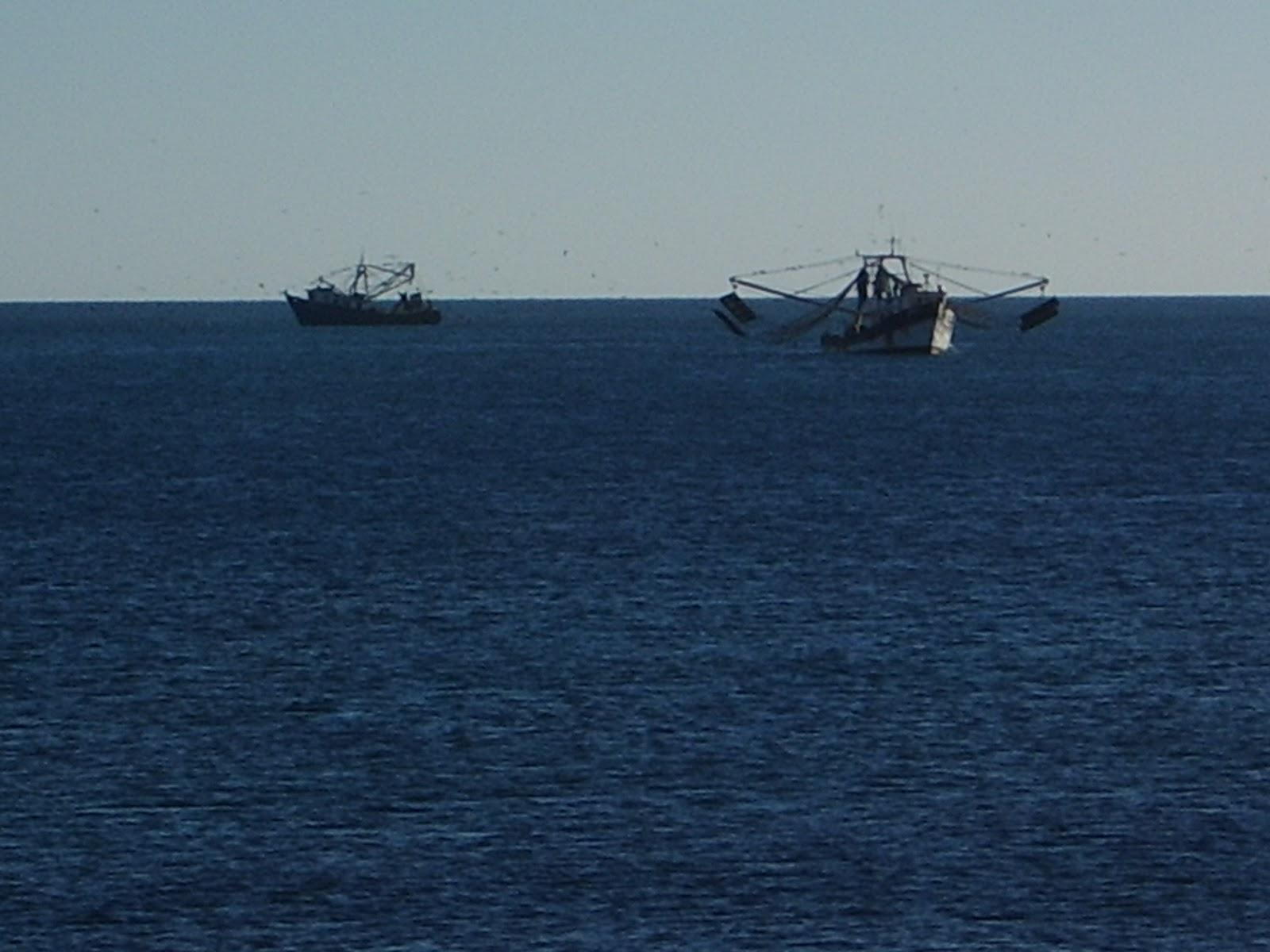 Chris travels san felipe to papa fernandez gonzaga bay for Fishing in los angeles