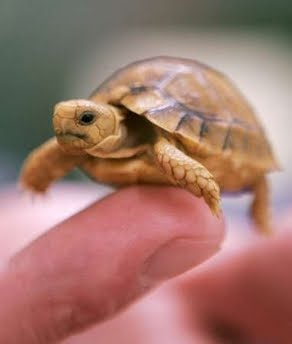 Pet Turtle Care: What Do Baby Turtles Eat? - Turtle Feeding Strategies ...