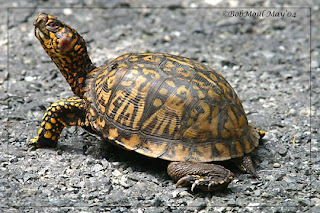 Pet Turtle Care: Turtle Facts, Habitat, and Care