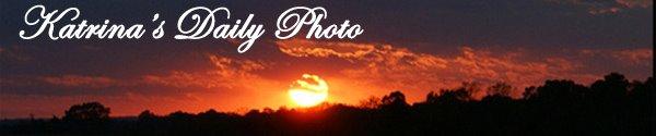 Katrina's Daily Photo