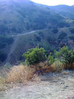 View of Runyon Canyon Off leash dog trail in Los Angeles