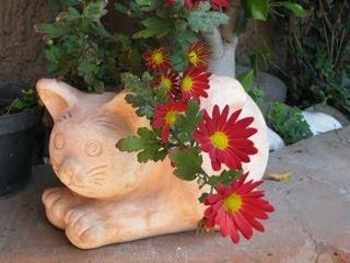 fleurs et chat dans mon jardin
