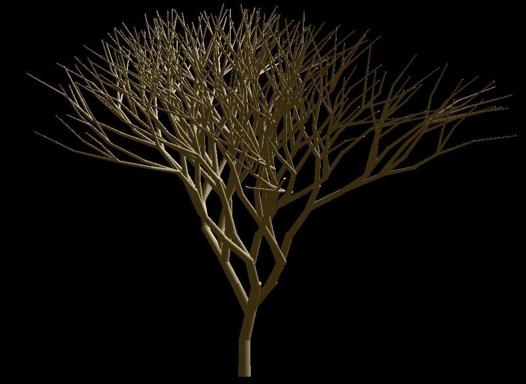 [pohon+3.JPG]