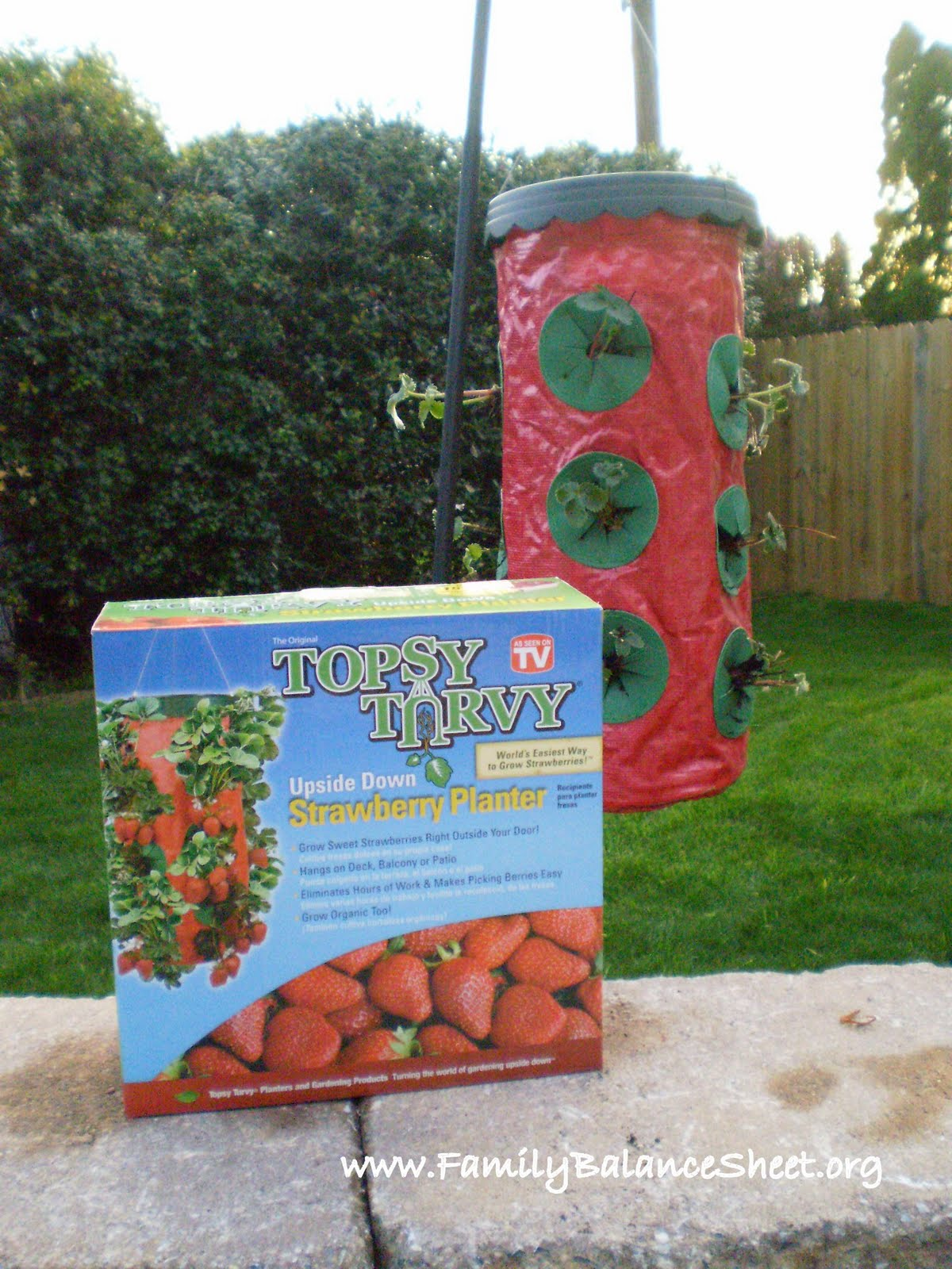 Topsy Turvy Strawberries – An Experiment