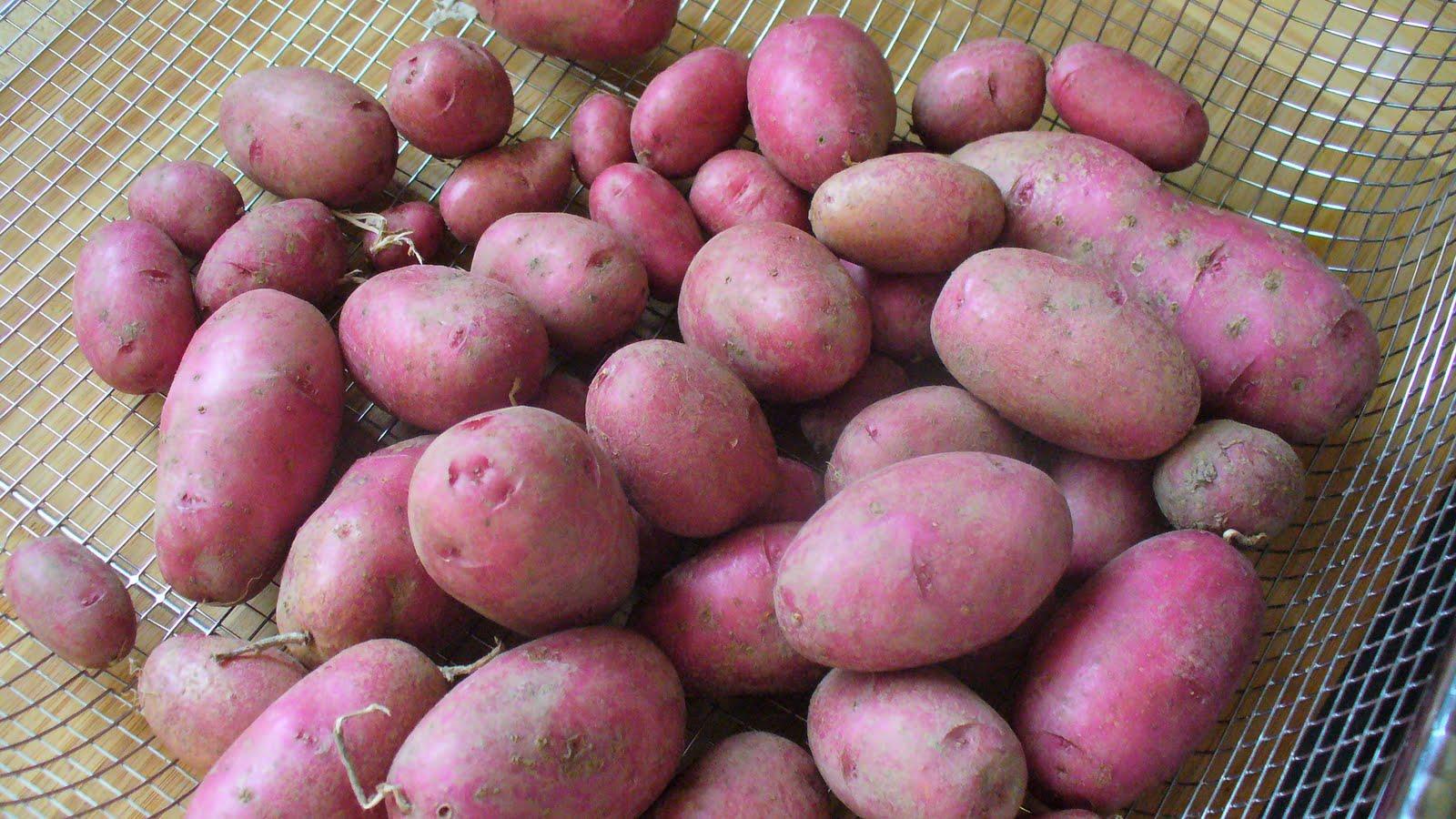 Grilled Garlic Rosemary Red Potatoes - Family Balance Sheet