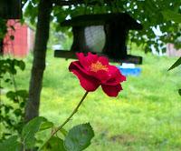 Rose birdhouse arkansas pink bush