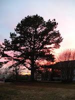 tree sunset porch arkansas