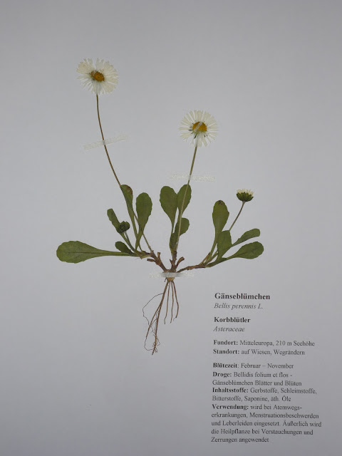 pflanzen f r herbarium viele fr hbl her aus der liste frei w hlbar ebay. Black Bedroom Furniture Sets. Home Design Ideas