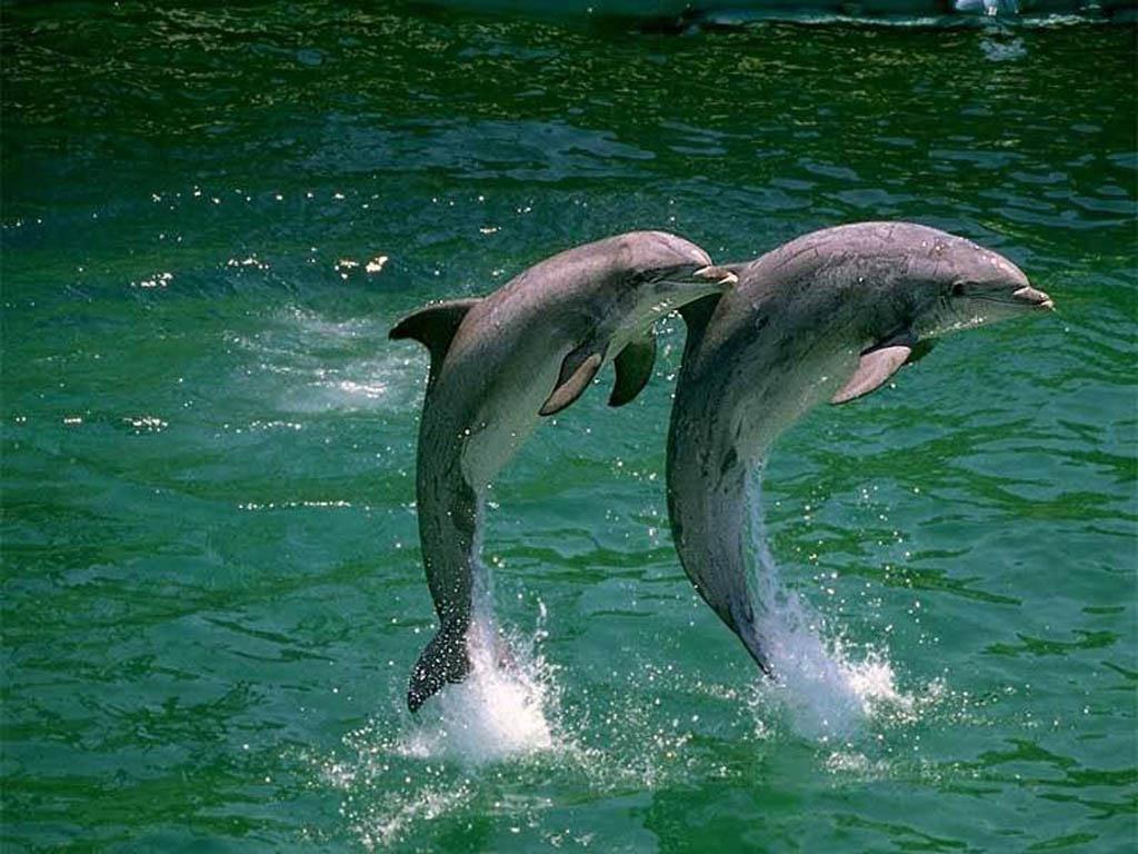 http://3.bp.blogspot.com/_G_AyW0esiQc/S73sME-XhfI/AAAAAAAAAAU/44jpfL4JsLI/s1600/delfin+++nadando.jpg