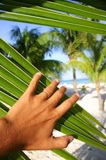 """Deja de mirar La Playa, comienza a mirar al Cielo al """"COMETA LULIN"""""""