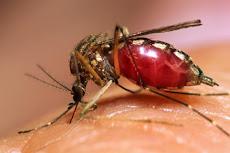 """Viernes 13 al mediodía """"Día de terror para los mosquitos"""""""
