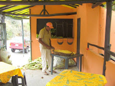 Via Turgua Moisés desgrana el oro en cada mazorca de maíz dulce para hacer sabrosas cachapas