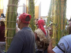 Los Palmeros de Chacao subirán  a la montaña en busca de hojas de palma para llevarlas a la iglesia