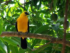 Turgua en el Hatillo, ofrece un territorio magnífico para el avistamiento de 91 especies pájaros
