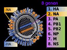 Casos de influenza AH1N1 llegan a 117