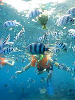Donde practicar Snorkeling en Islas del Caribe