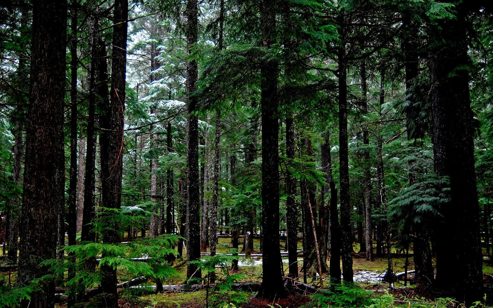 http://3.bp.blogspot.com/_GaHhpQPELjg/TOeGAr_wztI/AAAAAAAAAFM/RKQQXq7HNV0/s1600/forest_1_wallpaper.jpg