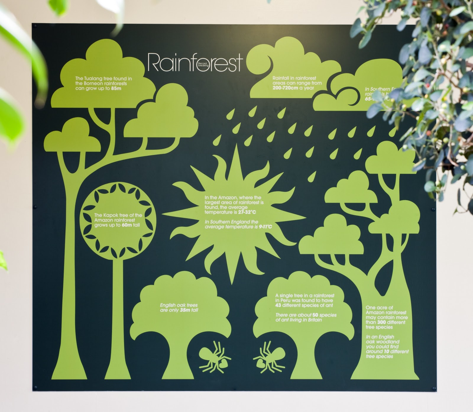 Diagram Of A Rainforest Plant Gallery - How To Guide And ...