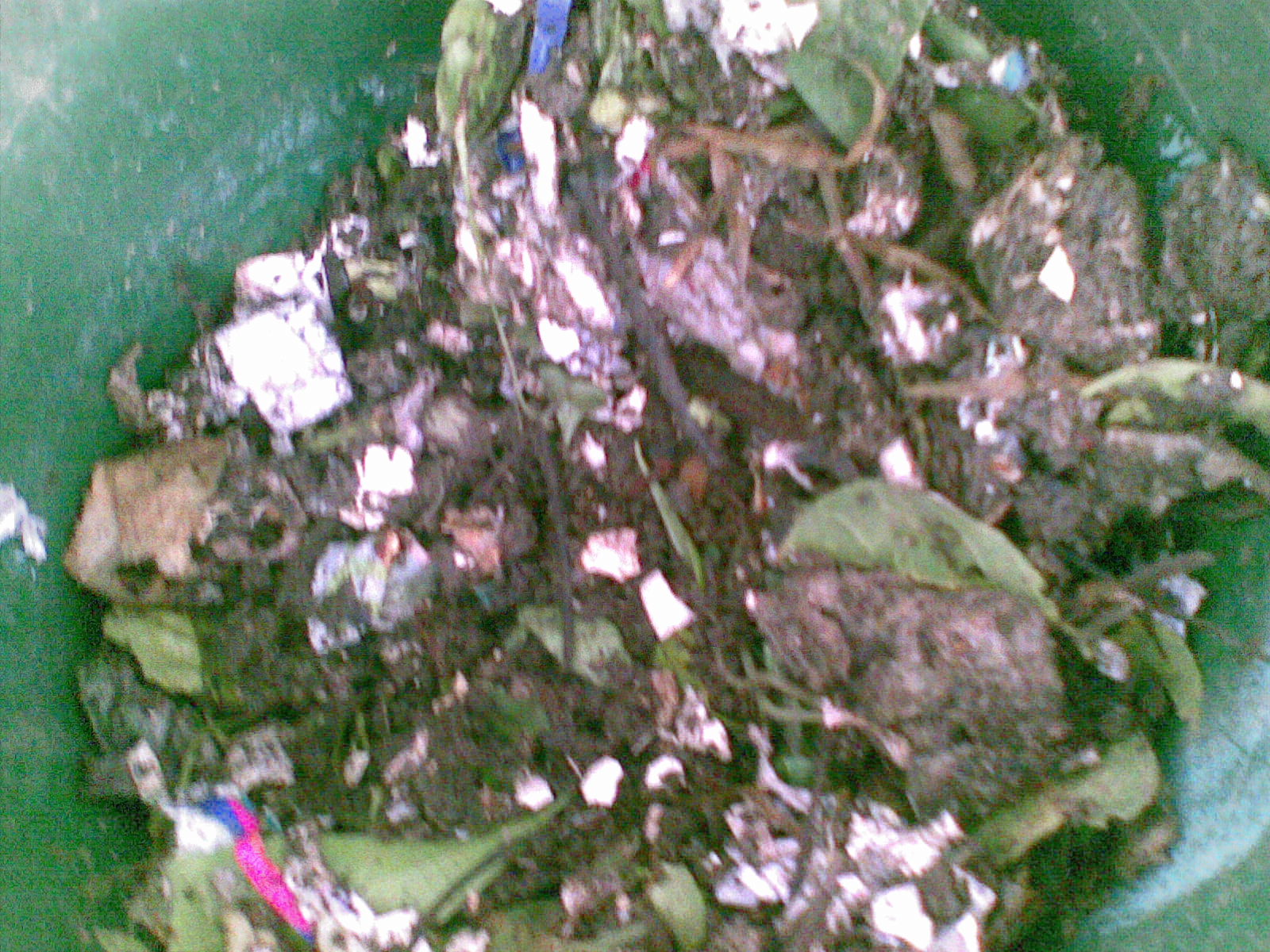 Mental Notes: Vermicomposting: My New Fascination