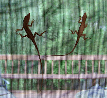 The twin lizards