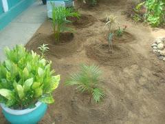 organizando las areas verdes