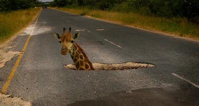 potholes-giraffe550.jpg