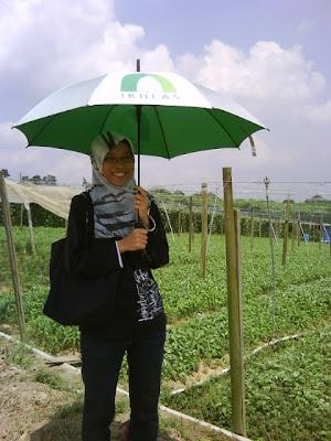 Gambar Kebun Sayur