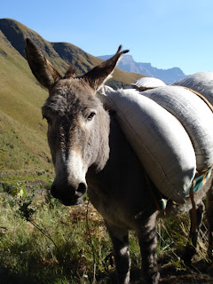 Dagga donkey at the bottom of Mnweni Pass