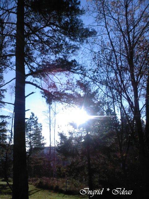 Mi propio bosque