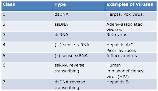 All about Viruses: Classification of Viruses
