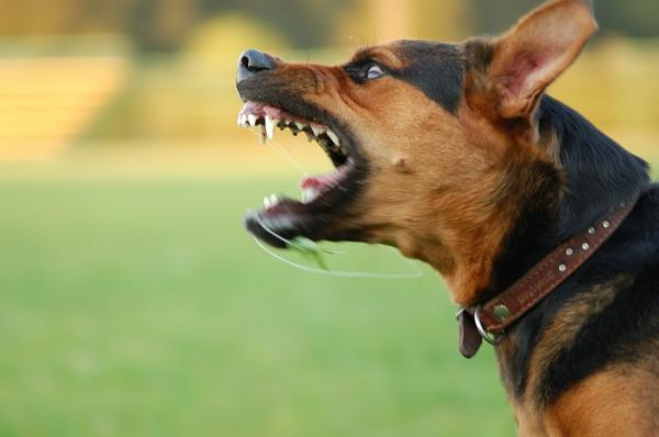 michael burkey's canine behavioral training: what does it mean when