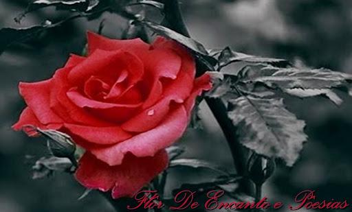 http://flordencanto.blogspot.com/