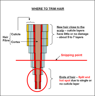 Trim Ends Of Natural Hair