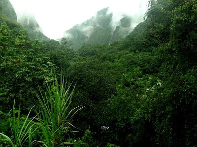 Imaginez la forêt et ressentez son énergie