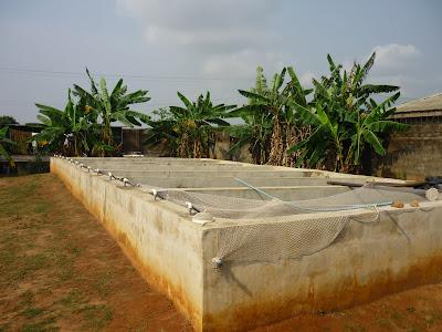 Catfish farming in nigeria farm for sale for Fish pond design in nigeria