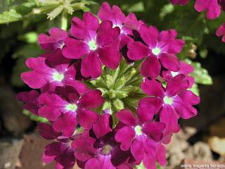 Naturaleza la naturaleza for Que son plantas ornamentales