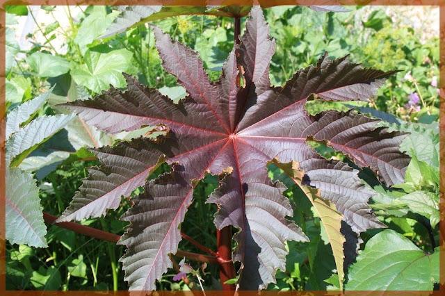 Ledoubsjardindanabel for Plante 4 images 1 mot