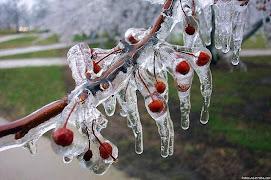 cerezos congelados