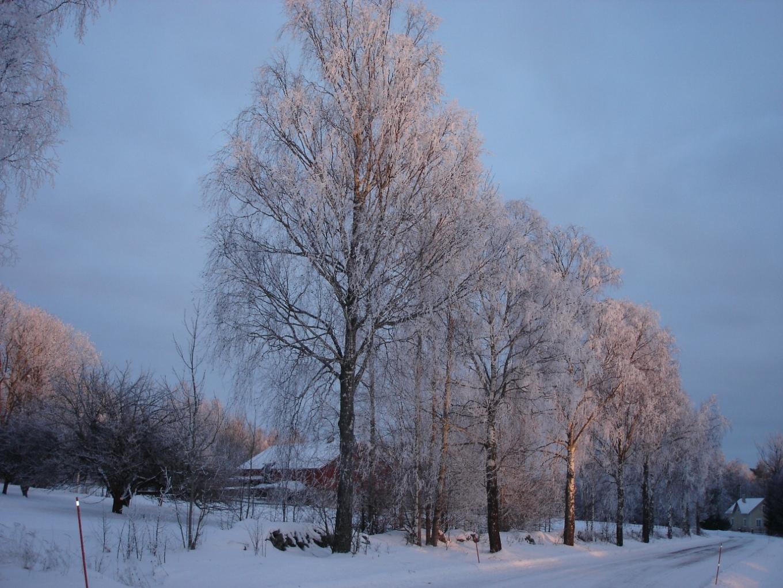 Toner: december 2010