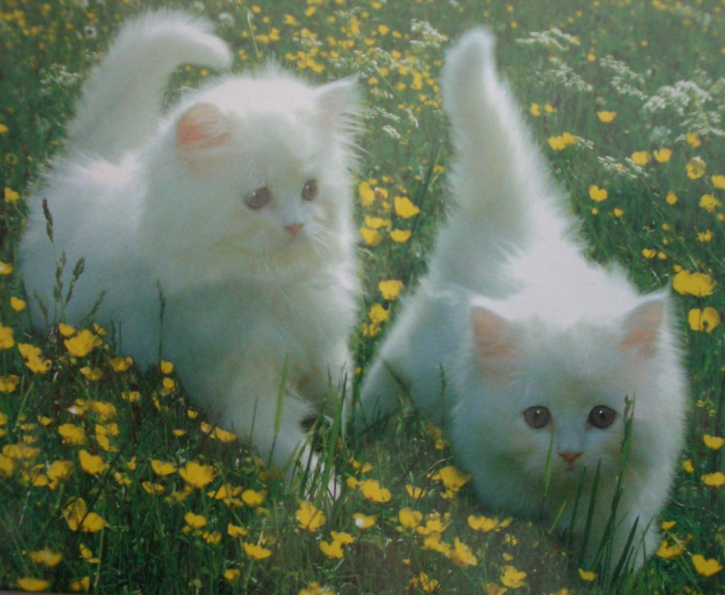 http://3.bp.blogspot.com/_Gp3eyyuZWXI/TEUh3z94z_I/AAAAAAAALSg/T4hQ2FH6tRs/s1600/b3.jpg