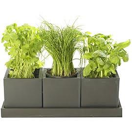 Bitkilerle Tedavi ve Zayiflama