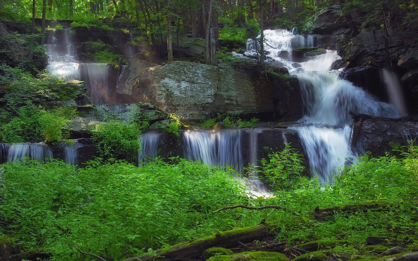 http://3.bp.blogspot.com/_Gq1jO6iuU2U/TSkWuncB6dI/AAAAAAAAHW8/aVIiCpFo4rU/s1600/forest+waterfalls+hd+wallpaper.jpg