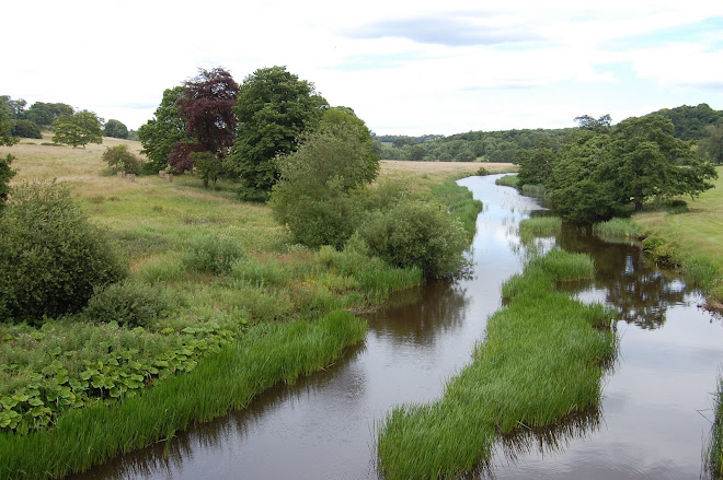 River Aln from the Lion's Bridge