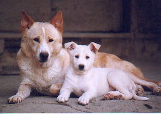 Mother And Son Canaan Dog