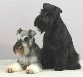 Giant Schnauze Dog Breed Image