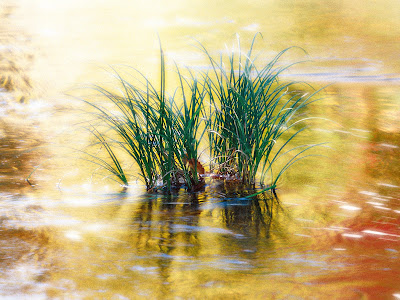 two grass on the river